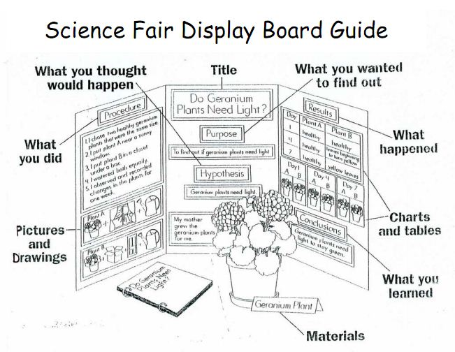 science fair conclusion examples new calendar template site. Black Bedroom Furniture Sets. Home Design Ideas